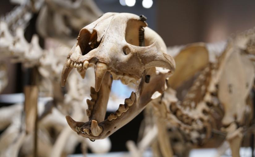 京都大学総合博物館、「標本からみる京都大学動物学のはじまり」